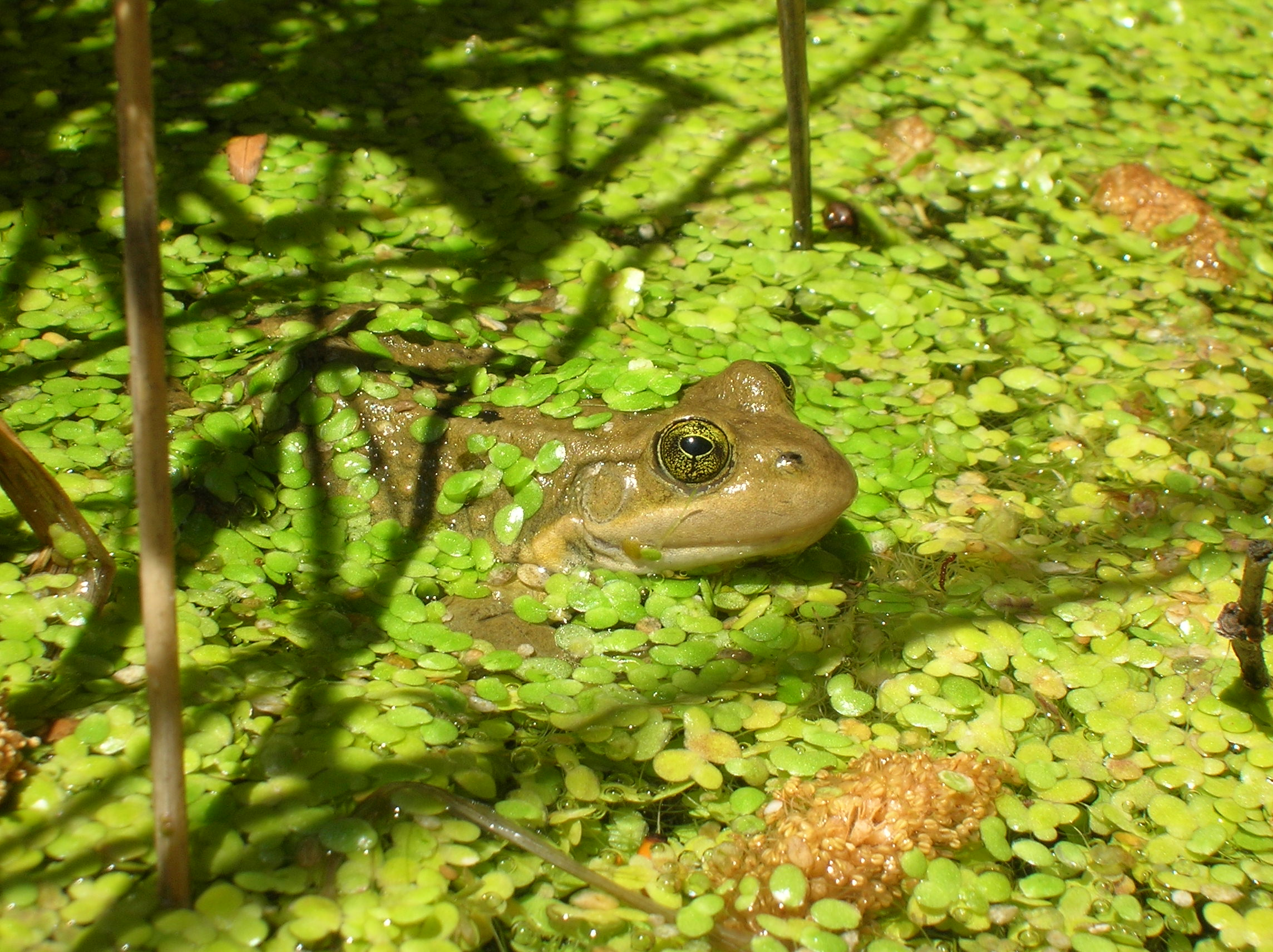 utah division of wildlife resources a focus on frogs