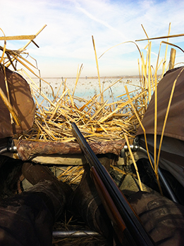 My view from the blind at Farmington Bay WMA.