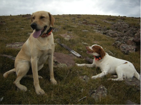My dogs Gauge and Trigger on a break during a ptarmigan hunt.