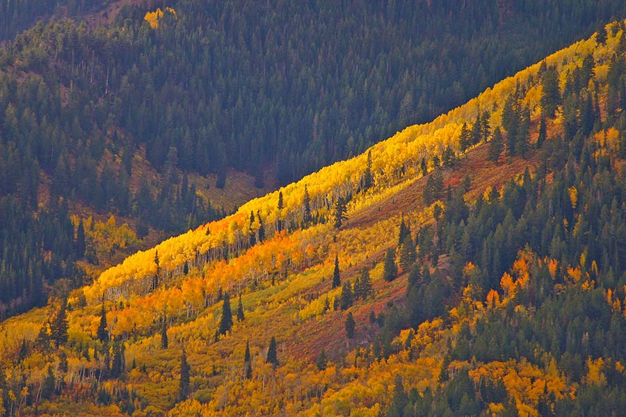 Utah mountain forests in fall colors