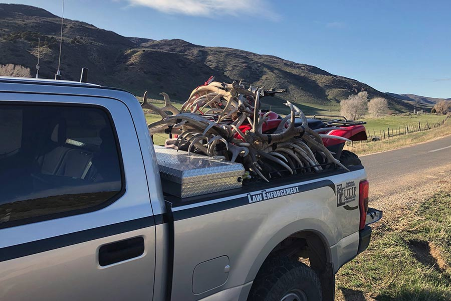 Confiscated antlers in truck bed